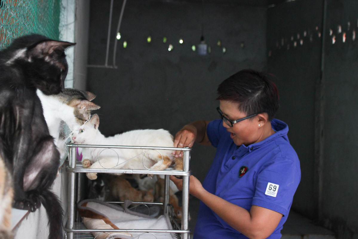 Ngoc is now taking care of around 100 paralyzed cats and dogs. Photo by VnExpress/Diep Phan.