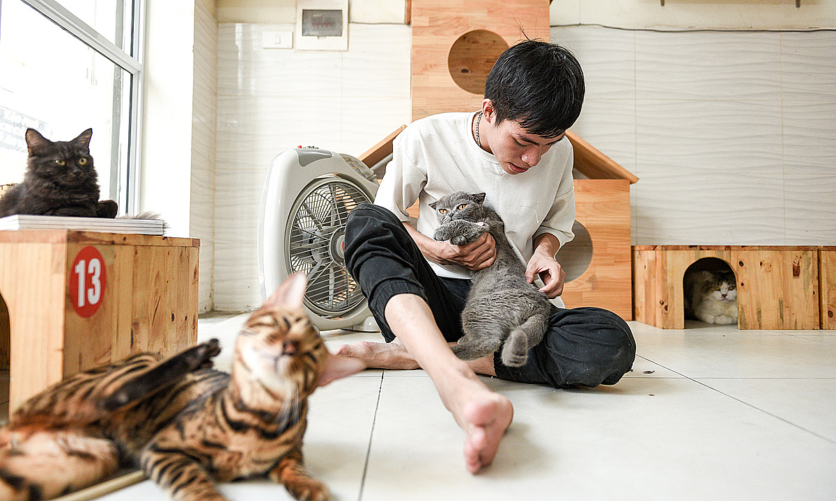 Binh takes care of a cat having an injury on his back. Photo by VnExpress/Thanh Hue.