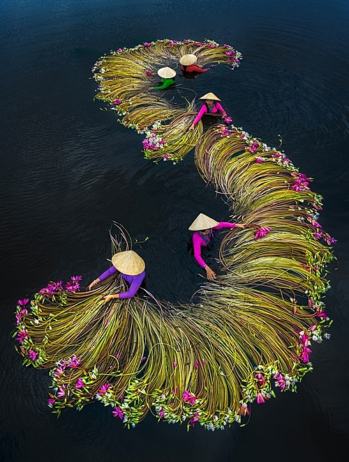 Waterlilies harvesting season taken by Pham Huy Trung was nominated in the People category. Trung's photo captures five women in conical hats washing pink water lilies in a flooded field in Long An Province.