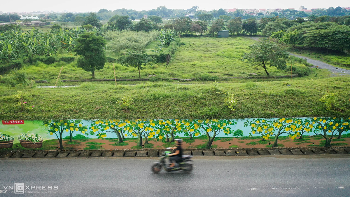 A mural featuring grapefruit, a specialty of Phuc Tho's Van Ha Commune. Each mural stretches more than ten meters long and 1.5 meters high. The entire mural costs hundreds of thousands dollars and the fund all comes from private investment.