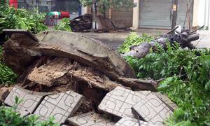 No respite: new tropical depression forms after storm Linfa