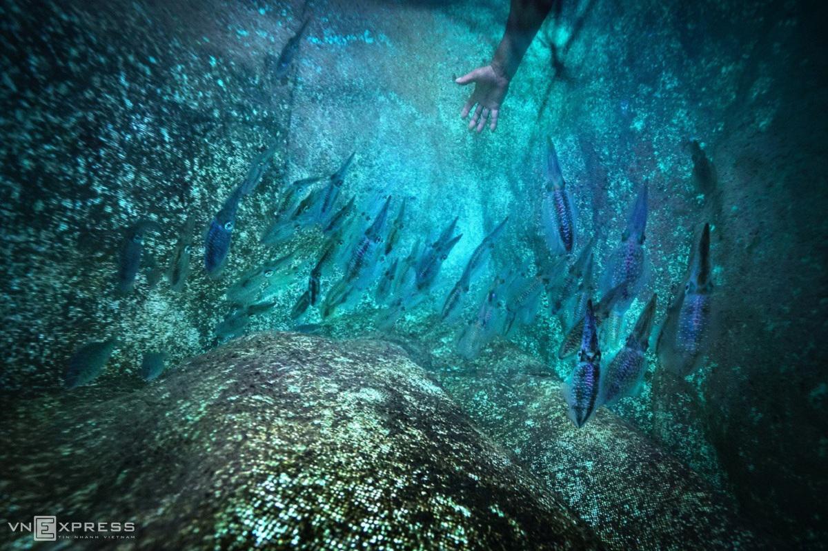 Squid farming meets seaweed season