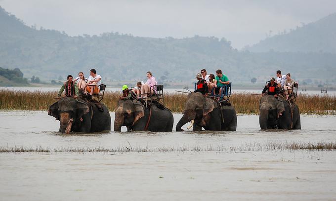 Central Highlands province mulls ban on elephant rides on safety, welfare concerns