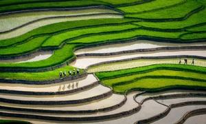 Mu Cang Chai named among world's most beautiful destinations