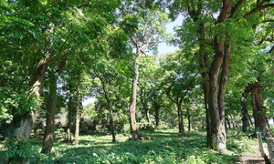 Vietnam susceptible to afforestation: expert