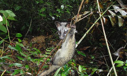 Forest ranger spends decade disarming wildlife traps