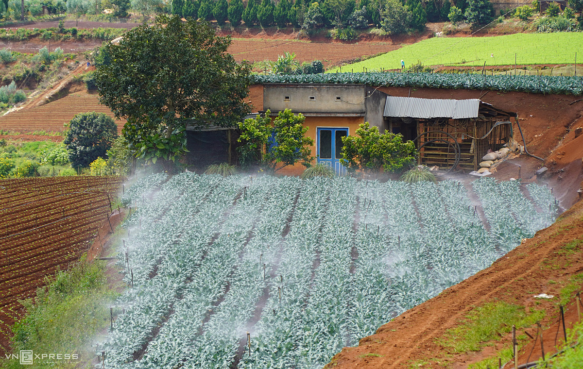 About 40 km from downtown Da Lat  to Dran, visitors will easily witness natural vegetable terraced valleys. The automatic watering system was installed by Da Lat farmers for agricultural production.