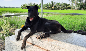 Dog keeps three-year vigil atop owner's grave