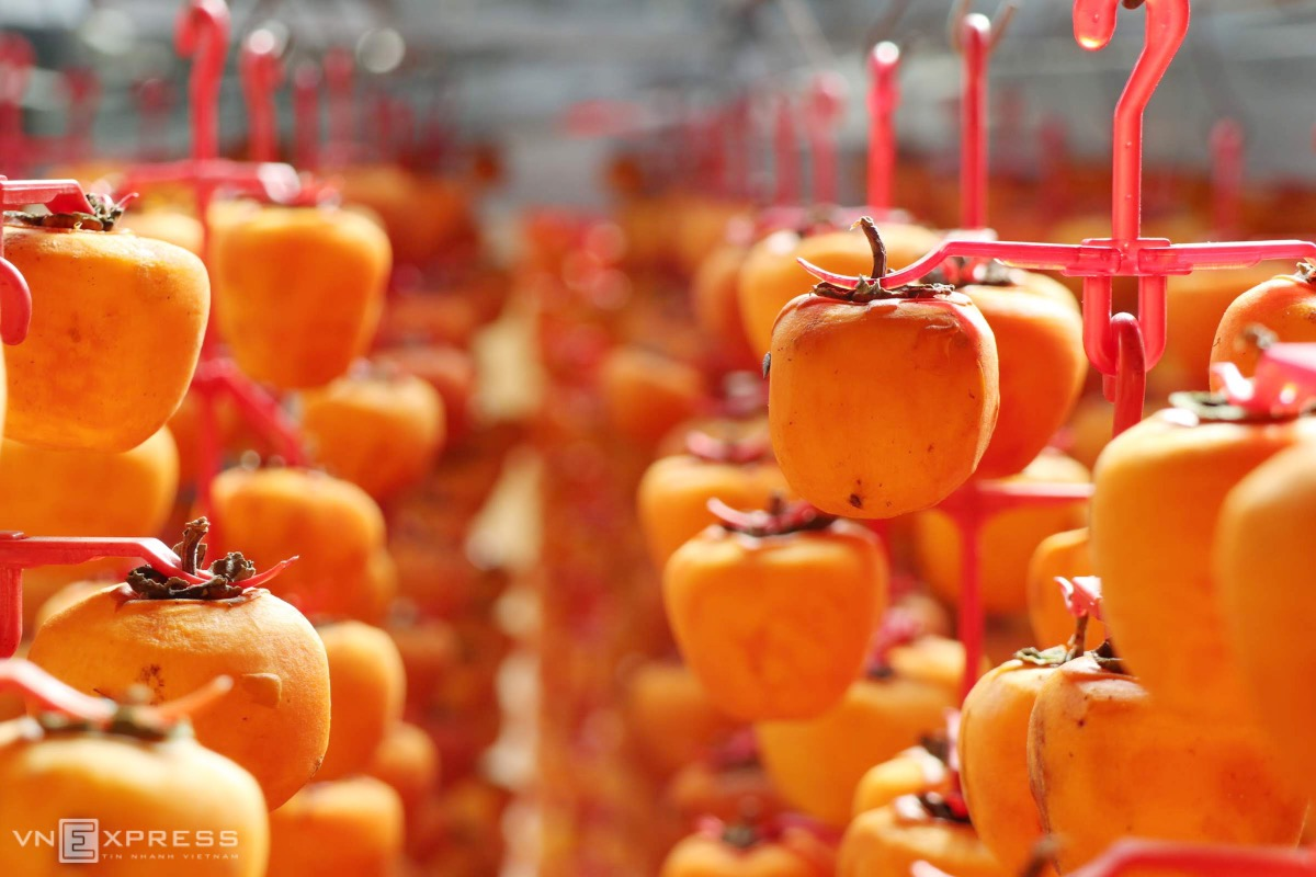 Persimmons are separated on plastic hangers and have no chemicals during the slow-drying process with sunlight and wind.