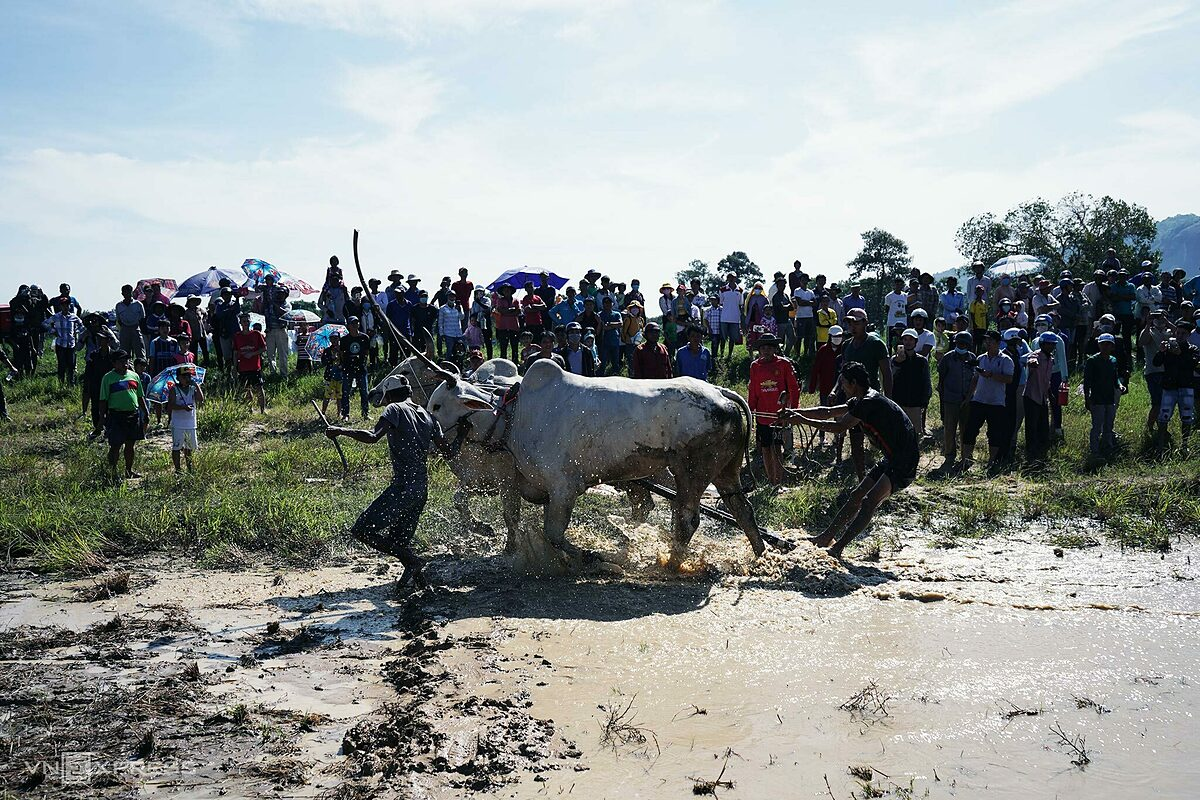 In the match, two pairs ran around the 5.5-hectare Soai Chek yard.Many spectators, especially photographers, gathered close to the edge of the track to catch all the dramatic moments when two bull teams sprinted to the finish line.