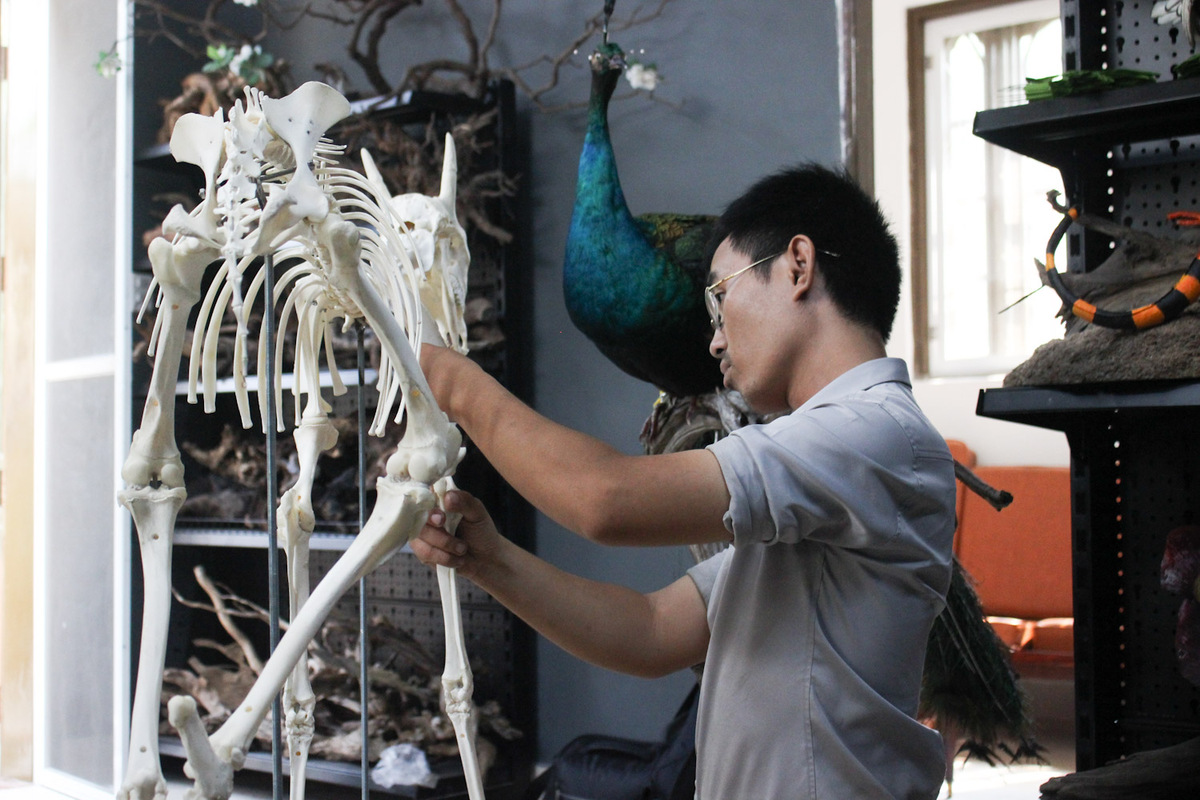 According to Hieu, this job only appears at some museum in Vietnam. He has founded a company focusing on making specimens and supporting young people, especially veterinary students, to learn more about animals and making their specimens.