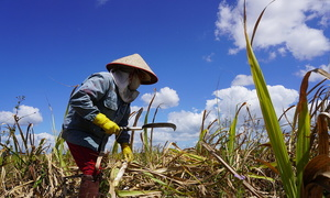 Sugar producers accuse Thai firms of dumping