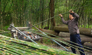 Grilling bamboos, a traditional occupation in Mekong Delta