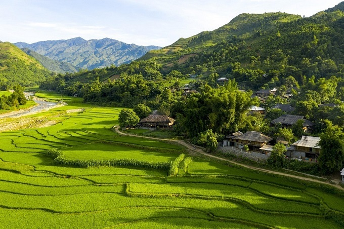 Tu Les rice fields, a major attraction of the commune. Photo acquired by VnExpress.