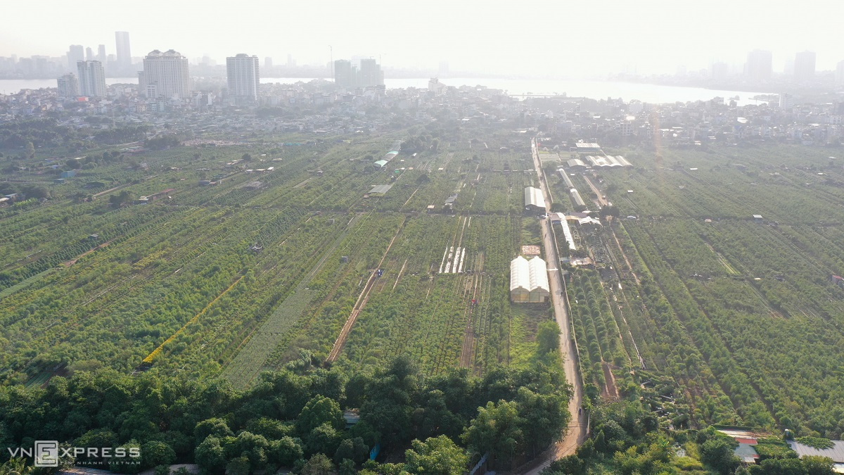 An aerial view of Nhat Tan peach gardens. The area is renowned as Hanoi's long-standing peach blossom hub. In 2006, local peach growers were granted trademark protection for their peach trees.