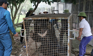 Moon bear freed after three years in a cage