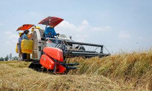 Vietnam rates hit 9-yr peak on supply crunch; Thai rates dip