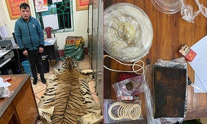 Man caught transporting tiger skin, ivory products