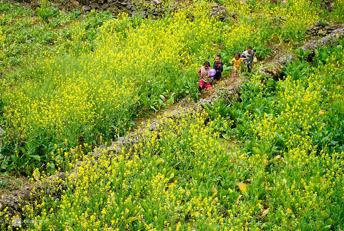A group of kids run in the middle of cabbage flower fields.