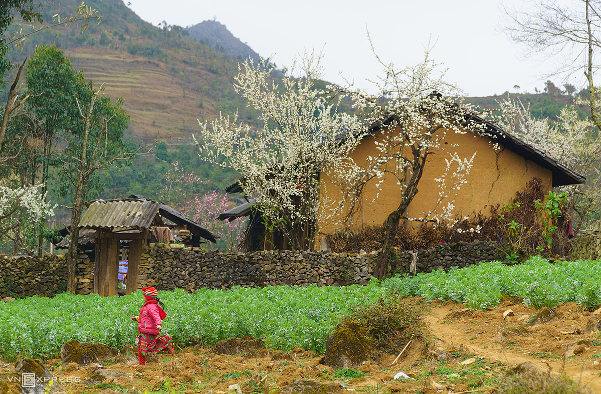 Lao Xa Village in Sung La commune, a beautiful small village filled with fresh peach blossoms in the spring that few tourists know. Previously the village is home to a lot of peach blossoms.