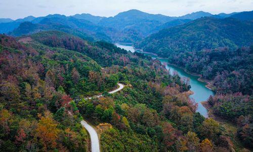 Maple tree colors transform landscape in northern Vietnam district