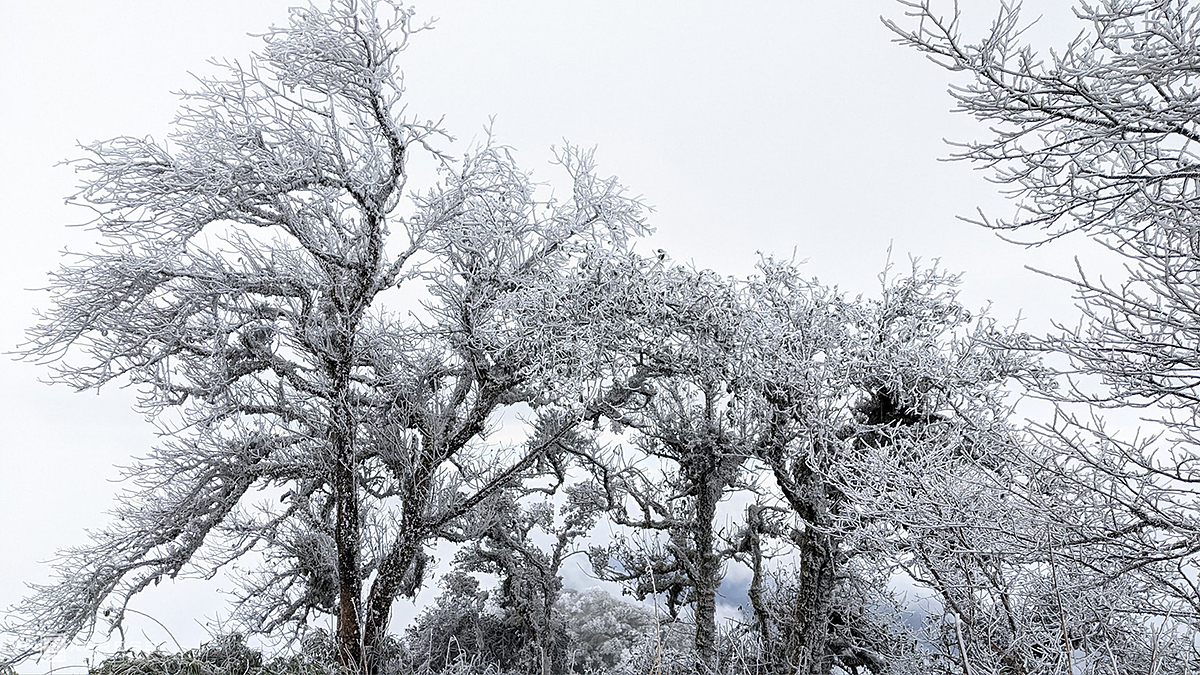 Though white frost and ice create beautiful scenery like Europe that have been attracting tourists, but the harsh weather condition also cause difficulties and affect the lives and agricultural cultivation of local residents, the photographer said.