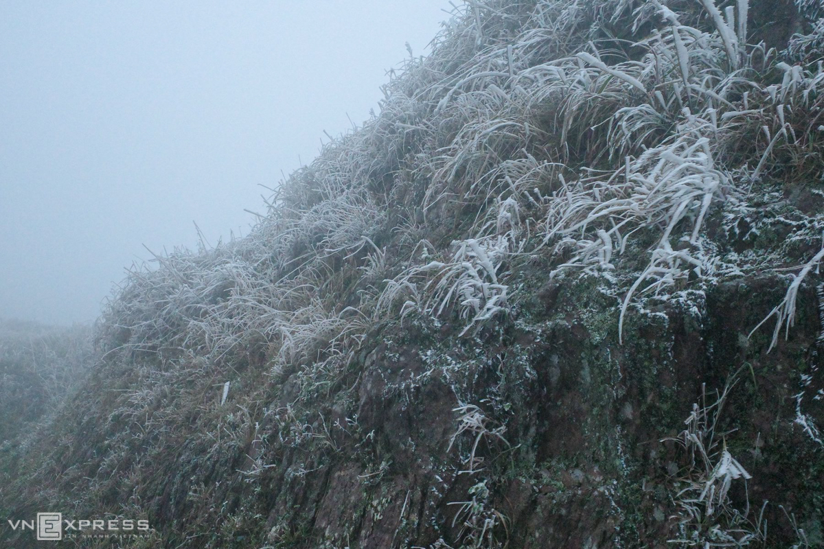 In coastal Quang Ninh Province, frost lays scattered across Bronze Temple on Yen Tu Mountain peak in Uong Bi Town as well as Border Marker 1297 separating Binh Lieu District (Quang Ninh Province) and Dinh Lap District (Lang Son Province). On top of Cao Ly mountain in Binh Lieu District, at an altitude of 1,000 meters, frost envelops the mountainous landscape and wintry plants.
