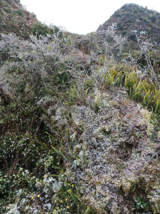 Ha Giang Province first saw frost in Xin Cai Commune of Meo Vac District and Dong Van District when temperatures dropped to one degree Celsius.