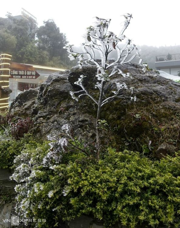 In Lai Chau Province, frost started dusting O Quy Ho Heaven Gate in Son Binh Commune, Tam Duong District at 10 p.m. Friday night.