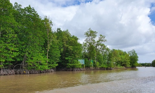 Weekend getaway to Ca Mau mangrove forest