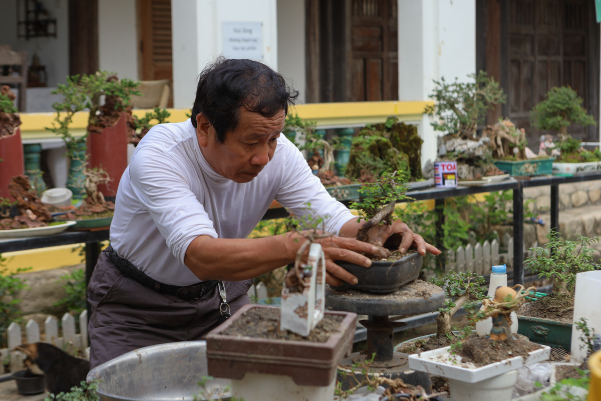 His tiny bonsai collection is diverse with many different floral types, shapes, ages and sizes.The most challenging part of making penjing is forming its roots and trunks because it is too small to take great care, neglecting to water or leaving it in the sun for many hours, the tree will wither. then die.