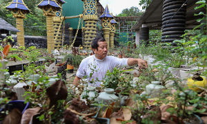 Man has world's biggest collection of smallest trees