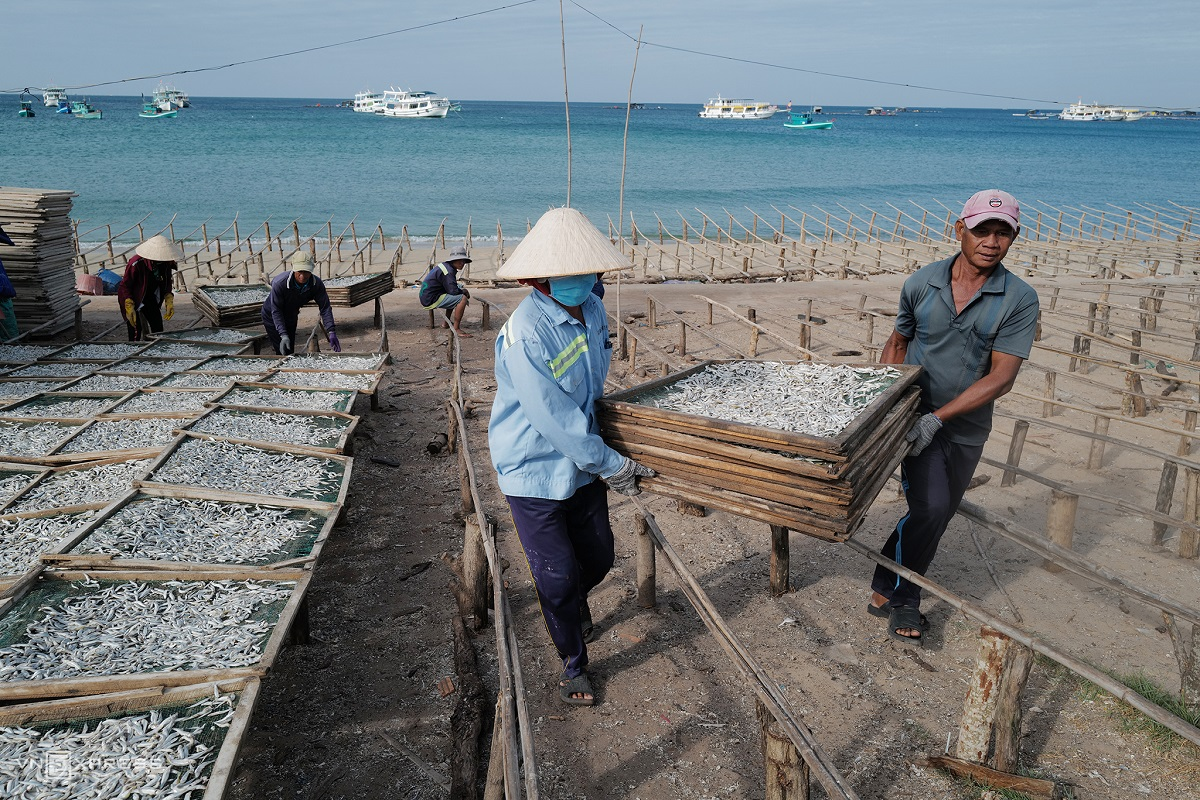 The windy and sunny weather on Phu Quoc Island during the dry season is ideal for sun-drying the fish, and these trays are put out early in the morning.While anchovies are caught throughout the year, the dry season in Phu Quoc is from October to March, when they can be sun-dried. During the rainy season, drying chambers are used.