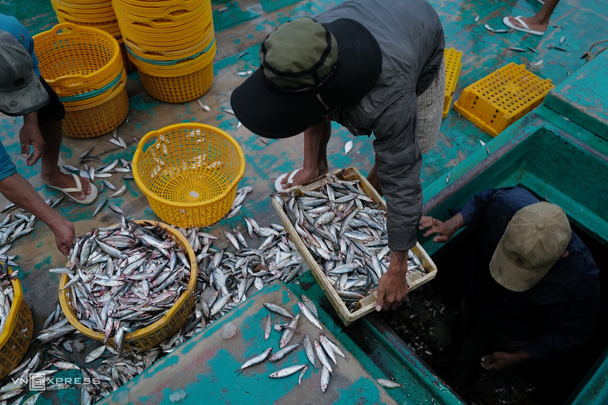 At 5:30 a.m., a fishing boat returns to An Thoi Port after operating off the coast for several days with fully loaded baskets. Wild-caught fish is preserved on ice in the hull and categorized prior to distribution.  Nowadays, many fishing boats are equipped with radio and sonar devices to increase productivity and employ modern techniques to ensure quality and reduce the loss of fish stock.  In the last lunar months of the year, boats have to return to harbor to refuel and make preparations for shore leave and Tet (Lunar New Year).
