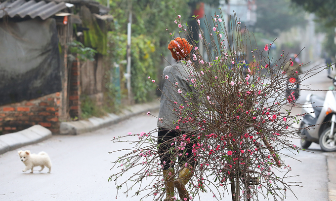 A street vendor sells branches of peach blossom, one of the most popular Tet decorations in northern Vietnam, on a Hanoi street ahead of the 2019 Tet in January. Photo by VnExpress/Ngoc Thanh.