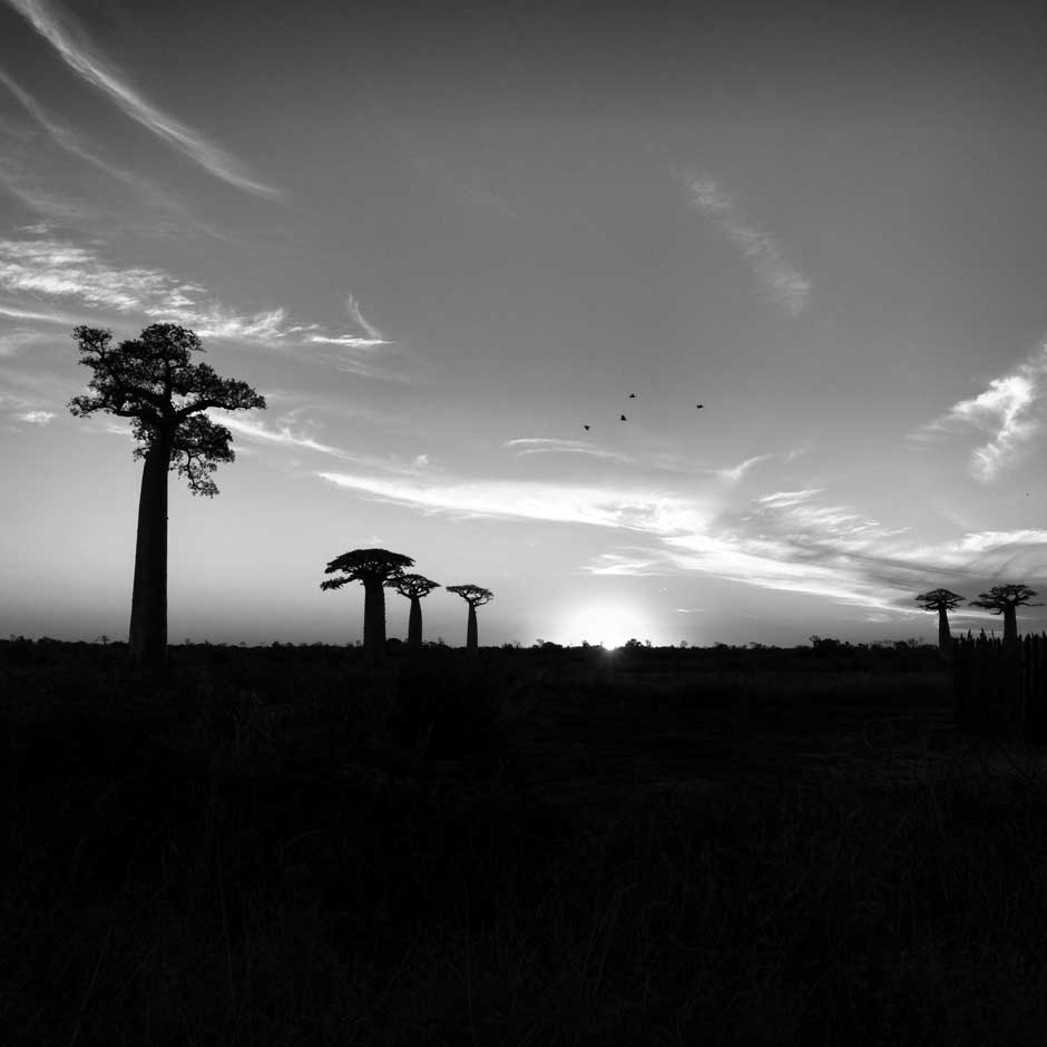 Another sunset from the Baobab avenue.