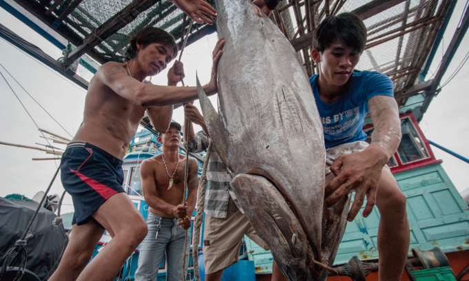 Another gloomy year forecast for tuna exports