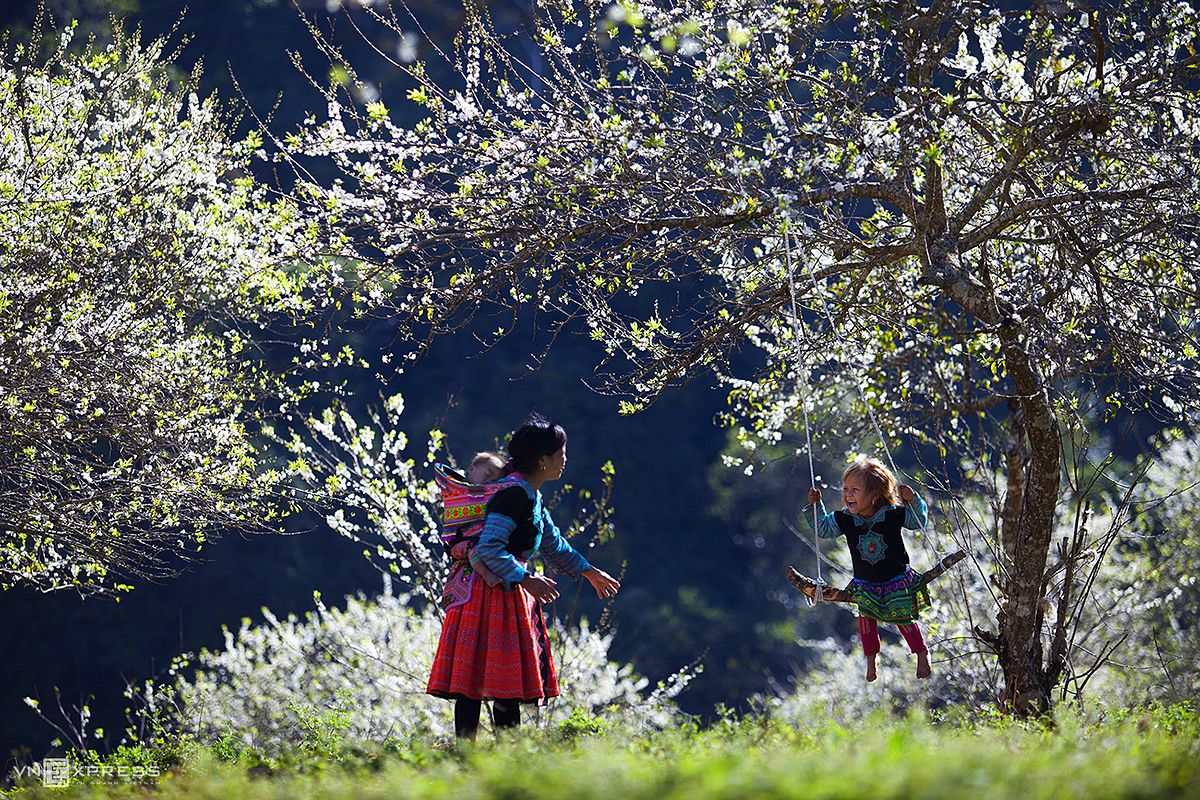 A HMong mother and two her children in the middle of a white plum forest at Phieng Canh Village of Moc Chau District in Son La Province.