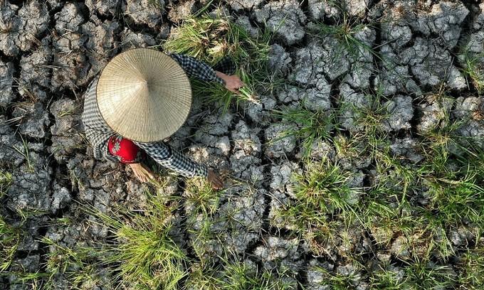 Mekong Delta faces chronic development blocks: experts