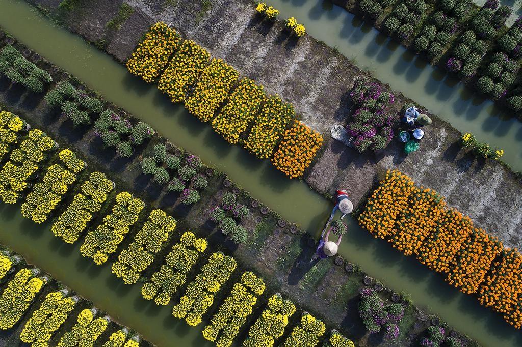 Spring blooms across Vietnam