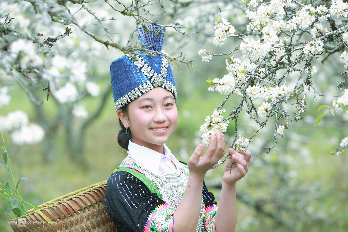 Plum blossoms add lyrical touch to Tet in Nghe An