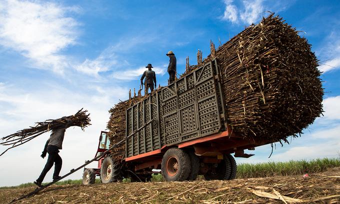 Vietnam slaps anti-dumping duty on Thai sugar