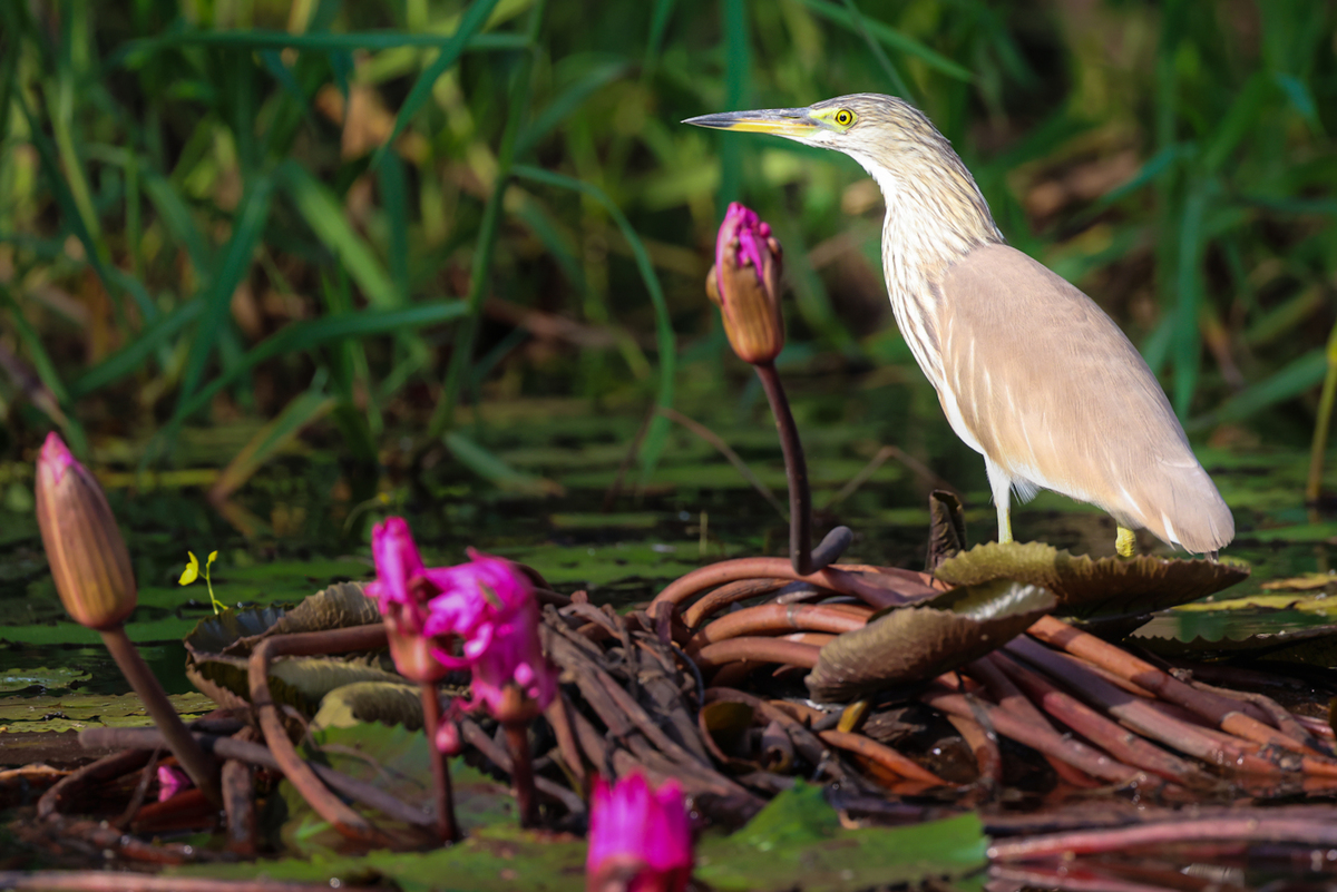 Birds, flowers revel in spring at Tram Chim national park