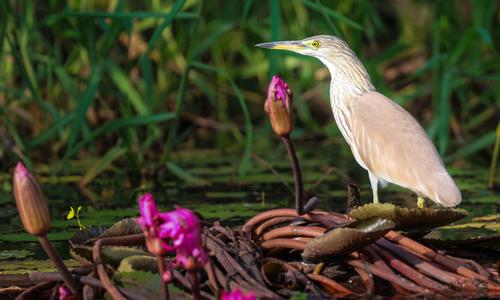 Birds, flowers revel in spring at Tram Chim national park
