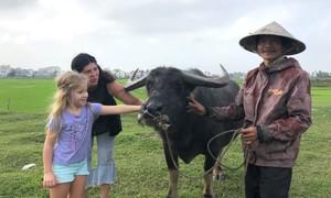 Hoi An buffalo tours a refreshing experience