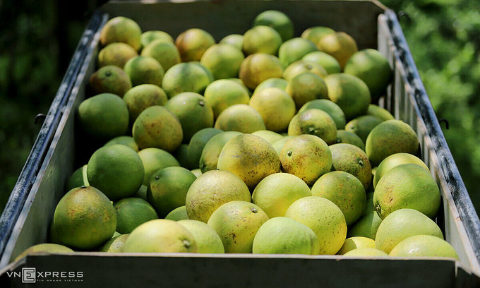 Vietnam, New Zealand to expand fruit trade this year