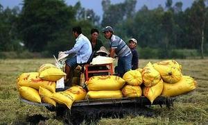 Vietnam 11th best performer in Asia food security ranking