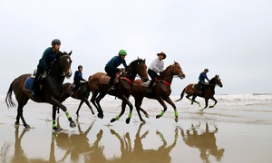 Imported thoroughbred horses to serve Ha Tinh tourism
