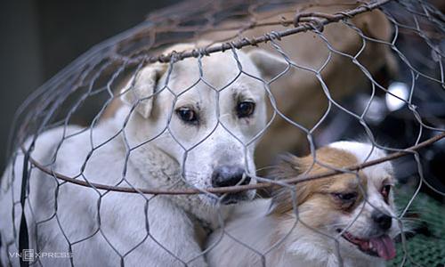 Animal cruelty dealt a blow with new $130 fine in Vietnam