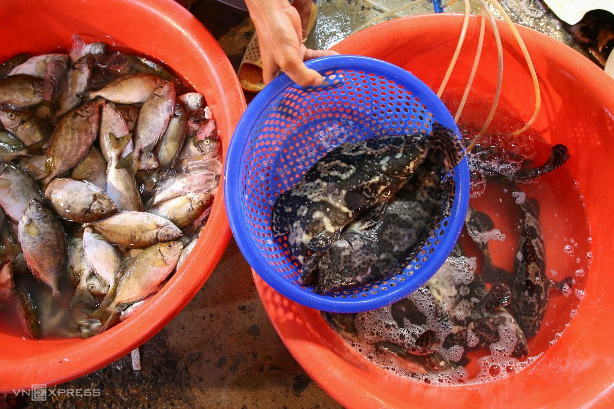 Live fish are put in tanks or basins with air pumps, ready to be shipped to restaurants.